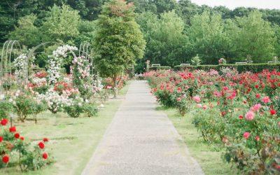 Parcs et jardins ouverts au public : des activités en accord avec les mesures sanitaires – partie 2